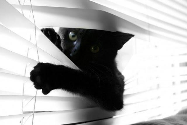 O Signo do Seu Gato: Capricórnio 1