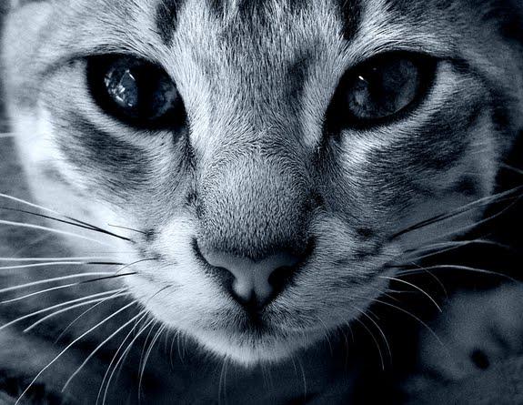 Entendendo melhor o comportamento felino 1