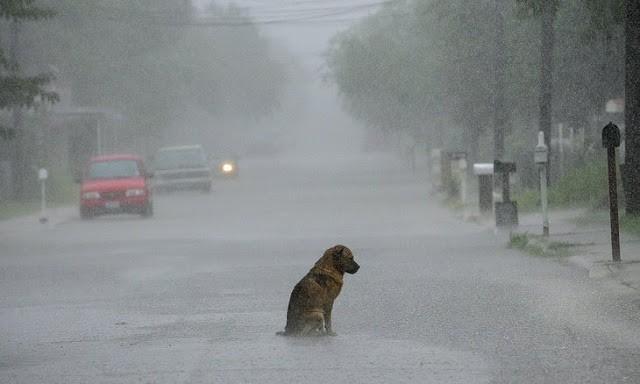10 maneiras de ajudar gatos e cachorros de rua 1