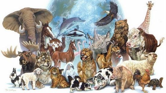Qual a diferença entre animal silvestre, animal exótico e animal doméstico? 1
