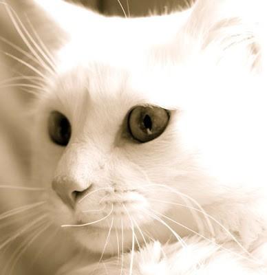 O Signo do Seu Gato: Libra 1