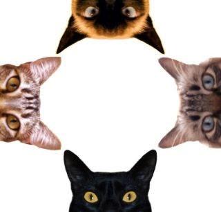 O Signo do Seu Gato: Aquário 1