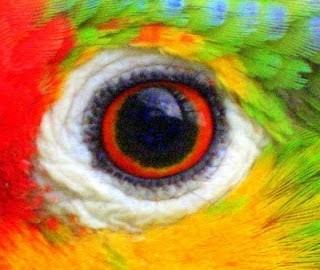 Os animais enxergam em cores? 1