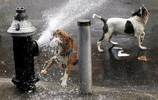 Animais sofrem com o calor 2