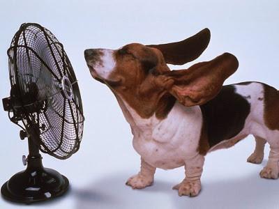 Animais sofrem com o calor 1