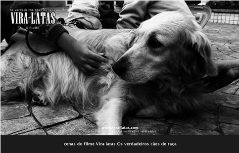 Vira-latas: Os verdadeiros cães de raça 1