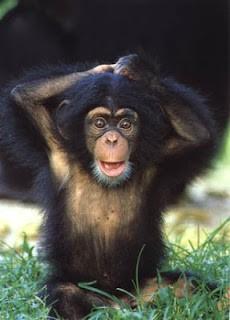 Animais superdotados: Ter um cérebro grande significa ser inteligente? 5