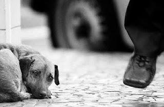 Não Compre um animal, Adote! Não alimente a indústria de animais de estimação! 4