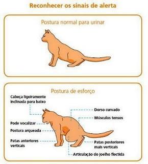 Gatos que urinam fora da caixa sanitária 2