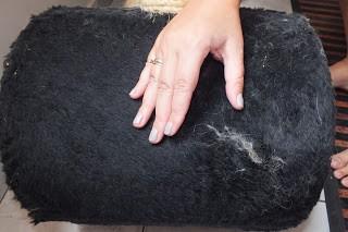 Como limpar os pêlos de gato? 2