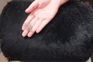 Como limpar os pêlos de gato? 3