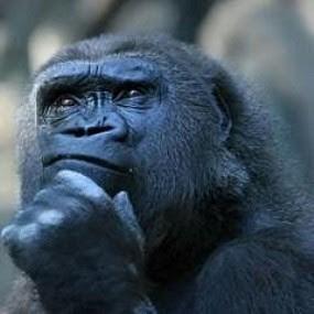 Os animais têm um sexto sentido que lhes permite sentir coisas que nós não percebemos. 1