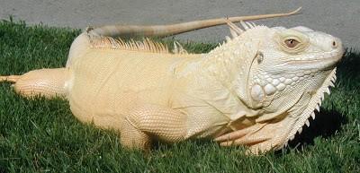Animais albinos são raros e têm dificuldades para viver 2
