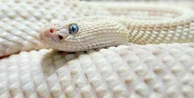 Animais albinos são raros e têm dificuldades para viver 3