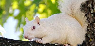 Animais albinos são raros e têm dificuldades para viver 4