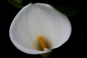 Você sabia que as plantas de sua casa podem fazer mal aos seus bichinhos? 3