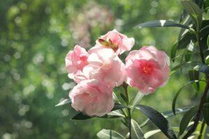 Você sabia que as plantas de sua casa podem fazer mal aos seus bichinhos? 4