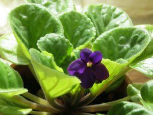 Você sabia que as plantas de sua casa podem fazer mal aos seus bichinhos? 5