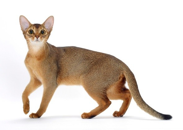 A História dos Gatos 7