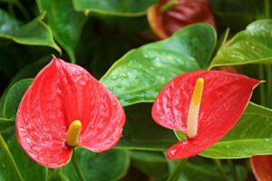 Você sabia que as plantas de sua casa podem fazer mal aos seus bichinhos? 2