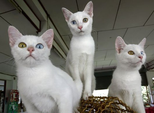 A História dos Gatos 5