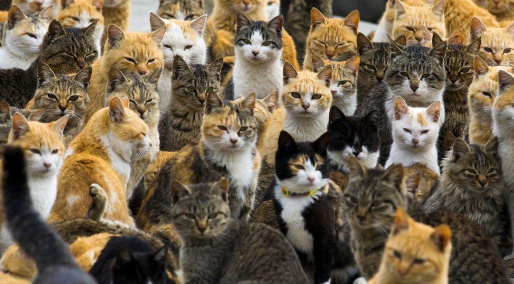 A História dos Gatos 1