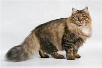 A História dos Gatos 4
