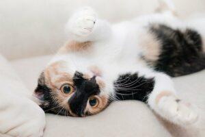 """Por que achamos que os gatos são """"antissociais"""" 3"""