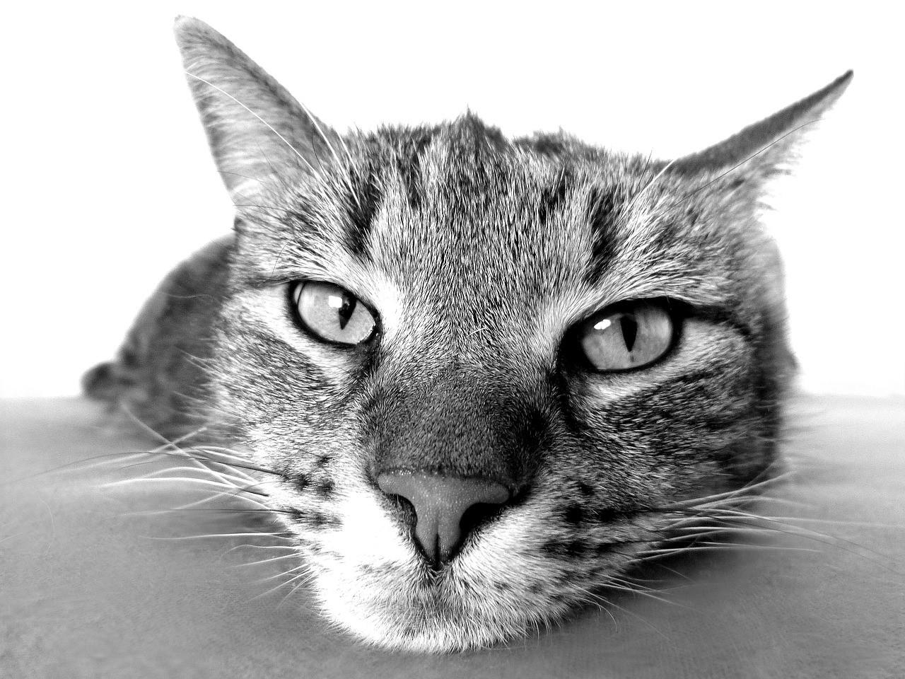 """Por que achamos que os gatos são """"antissociais"""" 1"""
