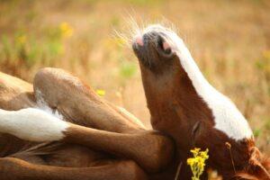 Os animais também adoram ficar chapados 8