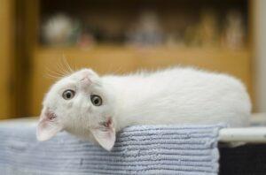 """Por que achamos que os gatos são """"antissociais"""" 2"""