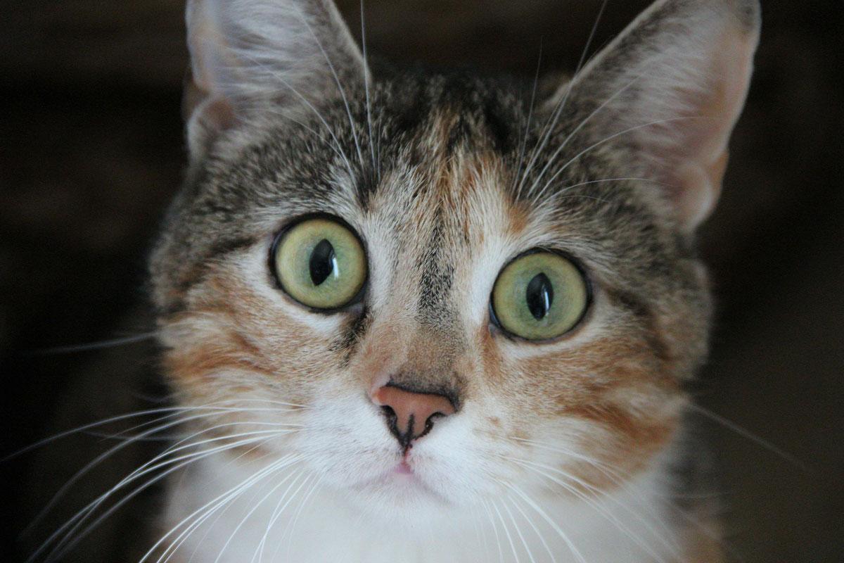 Gatos têm mais expressões faciais do que podemos perceber 1