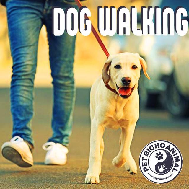 DOG WALKING - Rock & Classic Rock 1
