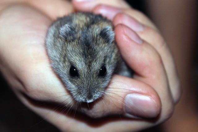 Bola de pelo: sabia que o problema também afeta os roedores? 3