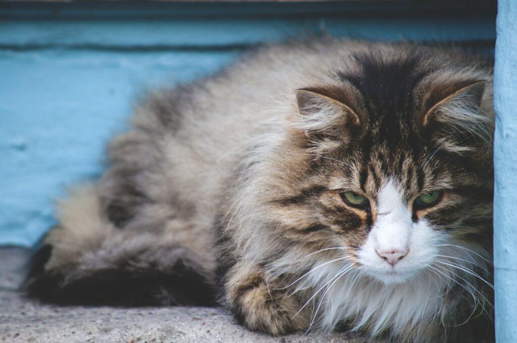 Coronavírus: Associação mundial de veterinários emite alerta sobre animais de companhia 2