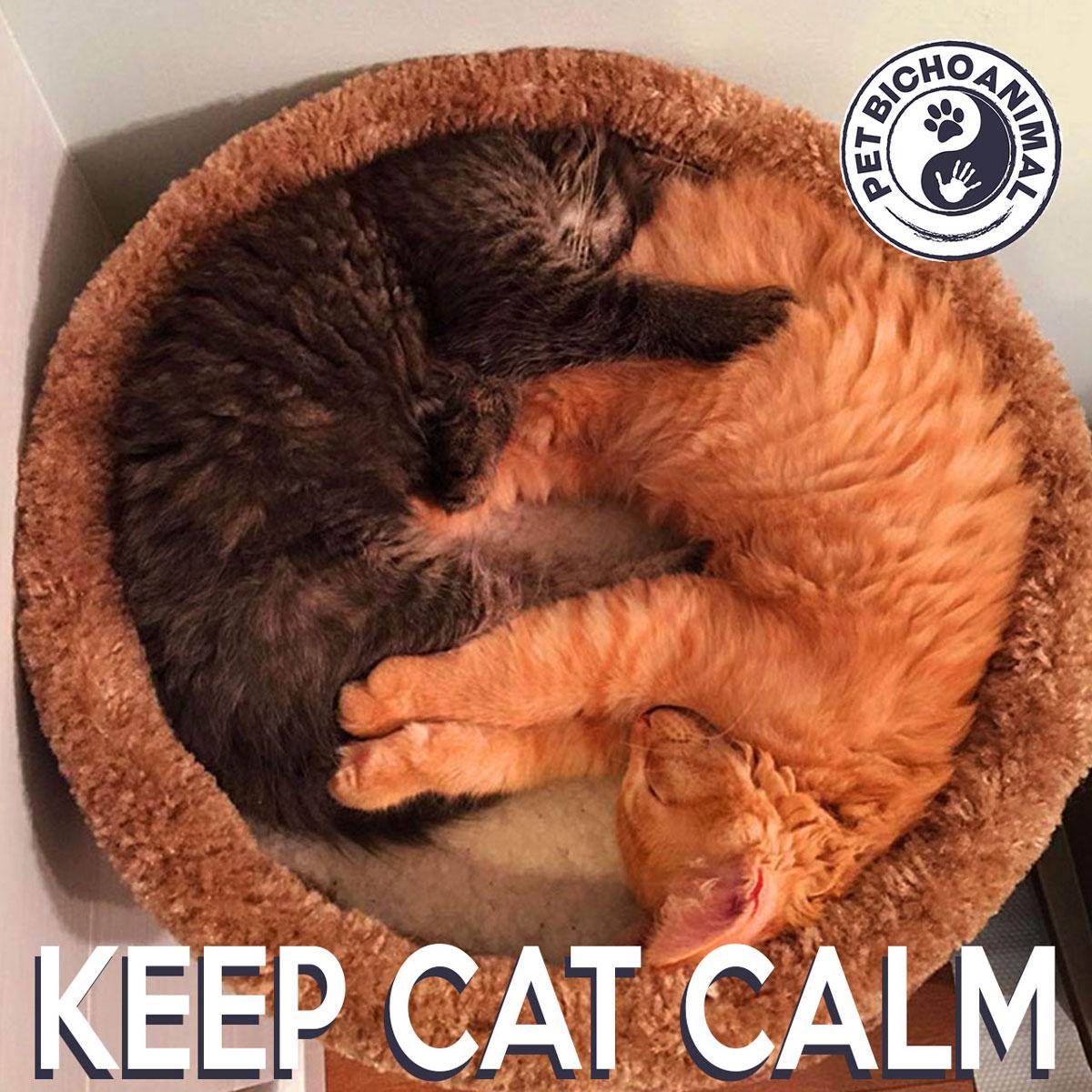 KEEP CAT CALM - SLEEP 1