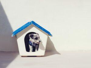 Pets em quarentena: veja 6 dicas para gastar a energia do seu peludo em casa 2