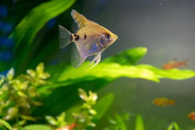 Cuidados com os peixes: A importância da manutenção do aquário 4