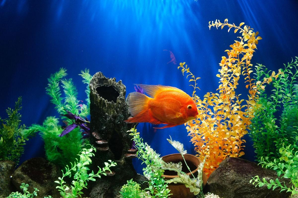 Cuidados com os peixes: A importância da manutenção do aquário 1