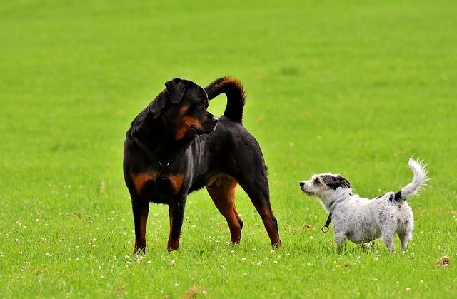 Por que pum de cachorro é tão fedido? 5