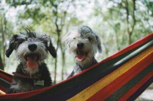 Pets em quarentena: veja 6 dicas para gastar a energia do seu peludo em casa 3