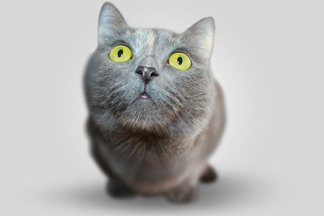 Miados: entenda o que o seu gato está querendo dizer 5