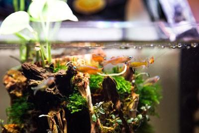 Cuidados com os peixes: A importância da manutenção do aquário 2