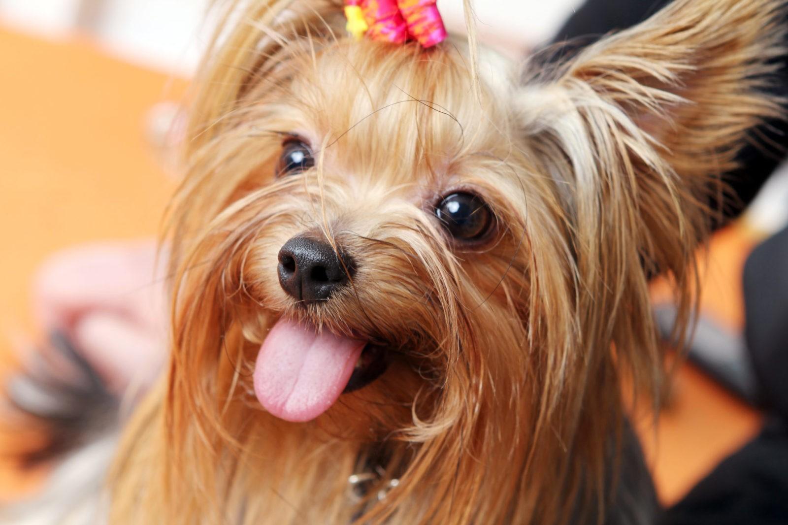 Estudo sugere que 3 em cada 4 cães podem sofrer de ansiedade 1
