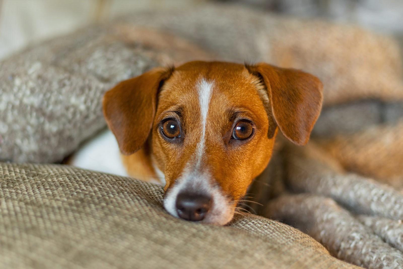 Estudo sugere que 3 em cada 4 cães podem sofrer de ansiedade 4