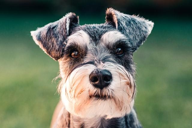 Estudo sugere que 3 em cada 4 cães podem sofrer de ansiedade 3