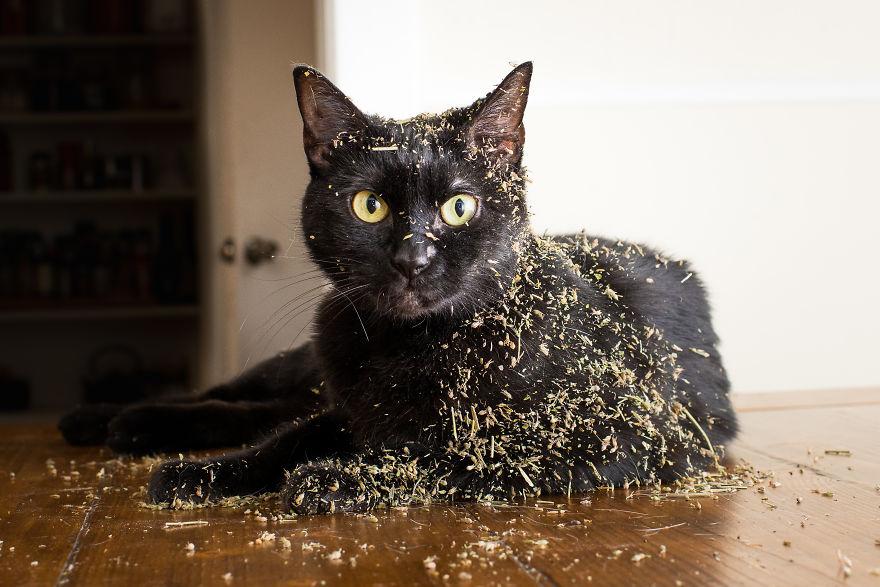 Fotógrafo registra imagens hilárias de gatos sob o efeito de Catnip 10