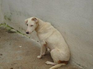Conheça a Ong: Cão Sem Dono 20