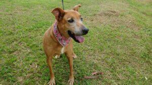 Conheça a Ong: Cão Sem Dono 16