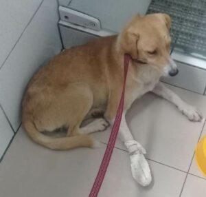 Conheça a Ong: Cão Sem Dono 13